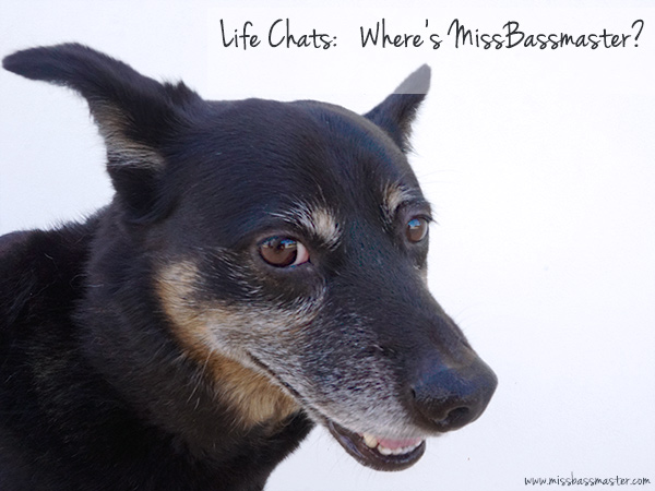 Life Chats: MissBassmaster Gone Missing